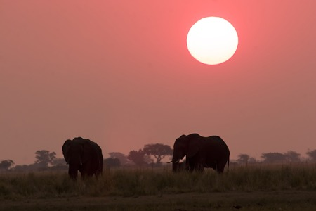 Elephant silhouettes in Chobe Game Reserve Botswana Stock Photo