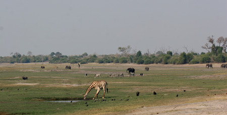 teaming: Chobe riverfront in Botswana teaming with wildlife Stock Photo