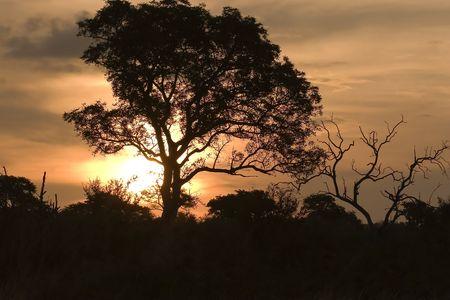 sunset in kruger national park south africa