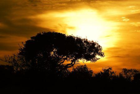 Sunset in Kruger Park South Africa