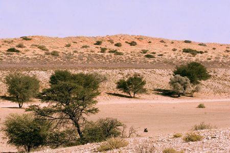 Kgalagadi Transfrontier Park Landscape (south africa) Stock Photo