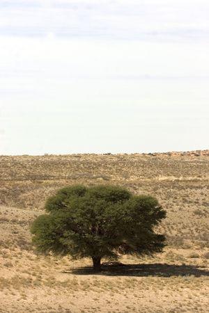 Landscape in Kgalagadi Transfrontier Park