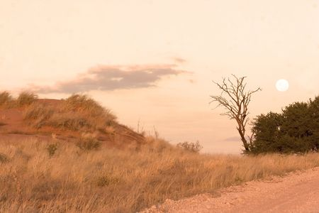 Moon over a sand dune in Kgalagadi Transfrontier Park