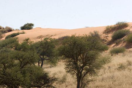 Sand dune in Kgalagadi Transfrontier Park