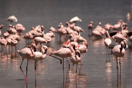 Flock of flamingos at Lake Nakuru Kenya Stock Photo - 3919703