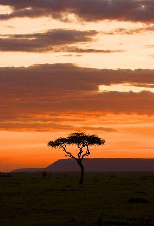 acacia tree sunset in masai mara Kenya Stock Photo
