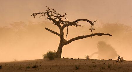 Dead tree in Amboseli Kenya