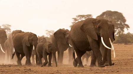 Herd of elephants in Amboseli Kenya Stock Photo