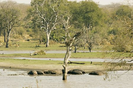 Scenery at the Lugmag dam in Kruger National Park South Africa