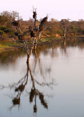 landscape thornybush game reserve