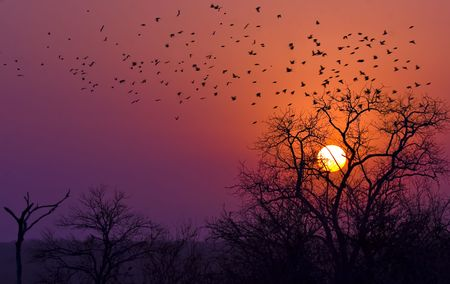 sun setting in kruger national park south africa Stock Photo - 5381443