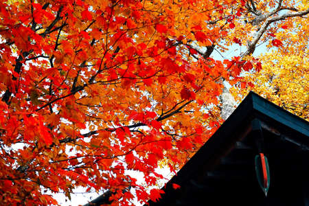 Autumn in Japan - Background Stock Photo