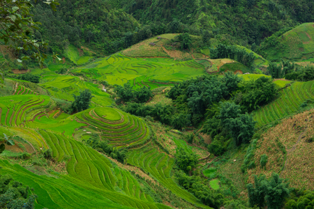 curve: Terraced rice field landscape in Sapa, Northern Vietnam.