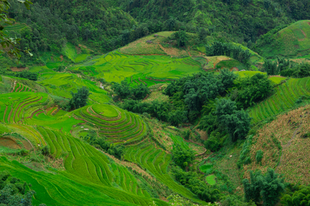 curve: Amazing view.Terraced rice field landscape in Sapa, Northern Vietnam. Stock Photo