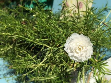 small garden: Flowers in the small garden