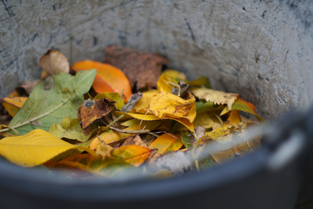 Fallen autumn foliage in a bucket Foto de archivo