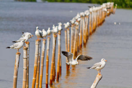 Seagull on bamboo stick photo