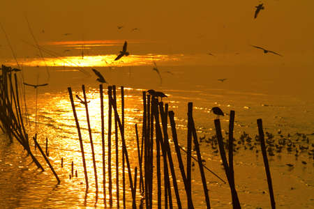 Silhouette Egret and Seagull in sunrise photo