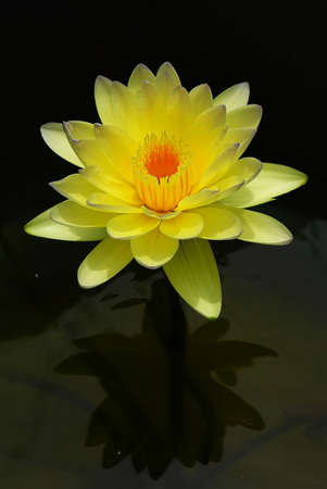 name day: Tropical day blooming waterlily name Poon Sub