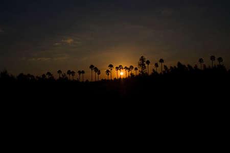 Sunrise between Indian Palm Trees at Kattur Village Near Ponneri at Chennai Tamil Nadu With Beautiful Colored Sky