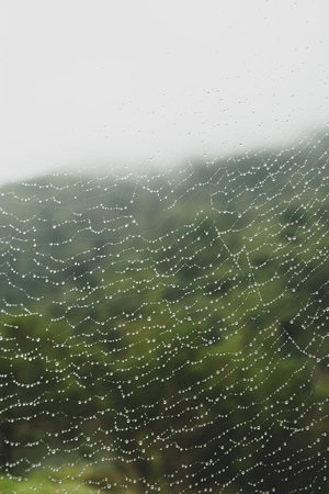 water droplets on a spider web in nature - Image