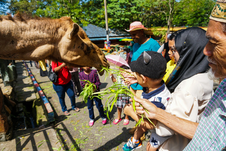 JOHOR,MALAYSIA - FEBRUARY 2019 : Visitor take their turn feeding the camels with their kids. One of interaction activities with animals available in the zoo. - Image Redakční