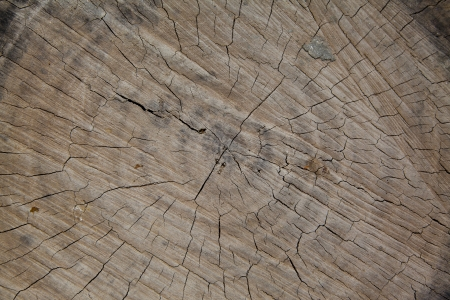 An old tree stump shows cracks photo