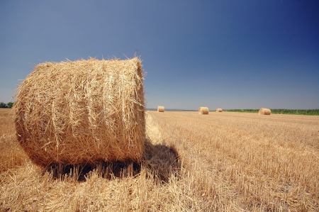 Blue sky and bales on the field,Field after harvesting, Serbia - Vojvodina