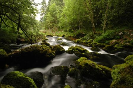 Mountain river in Slovenia, dreamy scenery, moss-covered stones Imagens