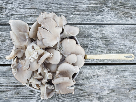 biologic: biologic oyster mushrooms