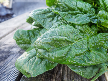 biologic: biologically grown spinach