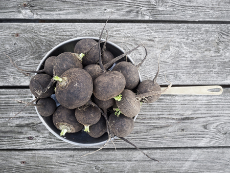 biologic: biologic black radish Stock Photo