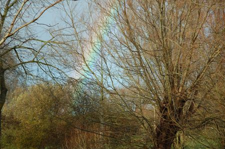 Rainbow In The Trees Stock Photo - 649408