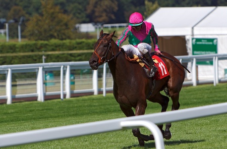 racehorse: Theyskens Theory winning at Sandown