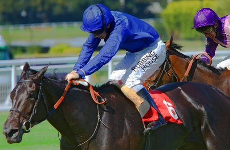 venues: Modeyra heading for the finish in The De Venues Atlanta Stakes Listed race with Ian Mongan up at Sandown  Editorial