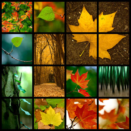 themed: Autumn themed collage - Beautiful colored fall pictures