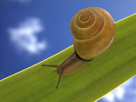 xp: Snail on the leaf Stock Photo