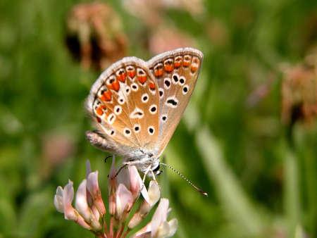 feeler: Resting Butterfly.