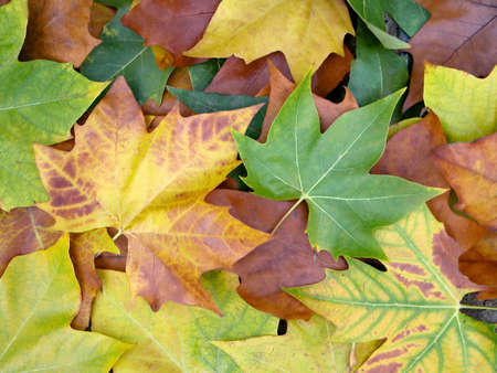 Set of leafs with many colors. Stock Photo