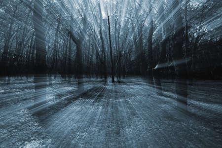 mistery: Mistery forest