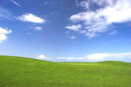 grassy field: Green field