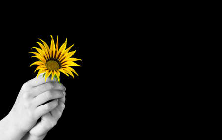 secure growth: Hands holding an yellow flower Stock Photo