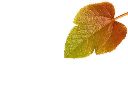 Leaf with color gradient photo