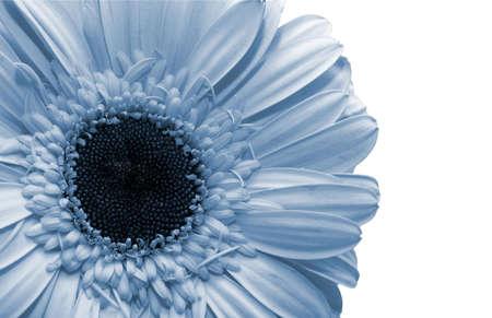 Beautiful spring flower photo