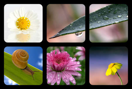 Nature collage with nature elements photo
