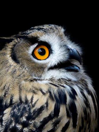 vigilance: Beautiful Owl (taked at 1600 iso)