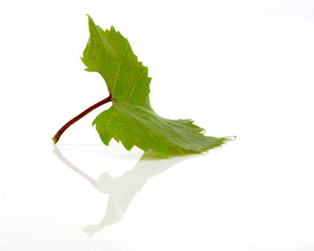 Green leaf in a white background with reflection photo
