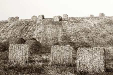 Hay bales standing ready to be collected photo