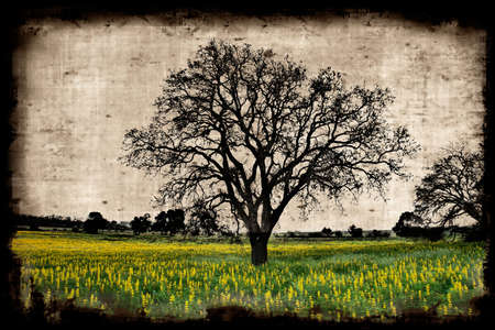 abrasion: Aged paper background with a tree landscape