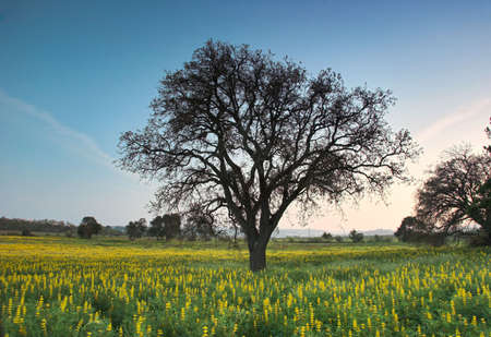 A big tree in a land full of flowers Stock Photo - 504475